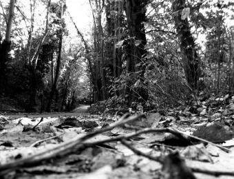 Quando le foglie cadono i rami cessano di pensare e gli alberi tacciono, 2015