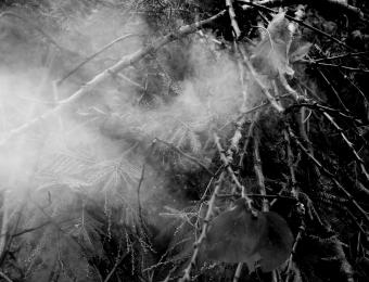Fumi di nostalgia, 2014