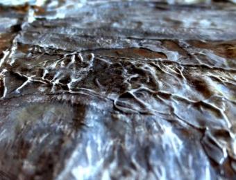 4. Ragione di vita, olio su una foglia, dettaglio, 2015